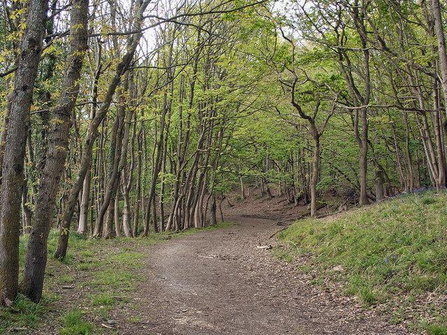 Woodland footpath at the foot of Graig Fawr, Margam