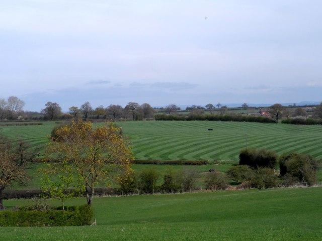 Stripes in the fields