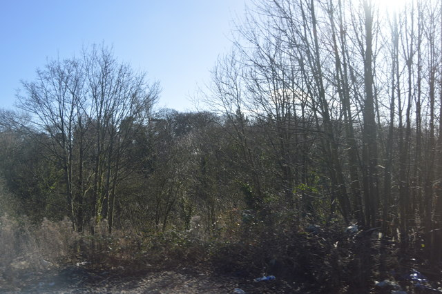 Woodland in the Bourne Brook Valley