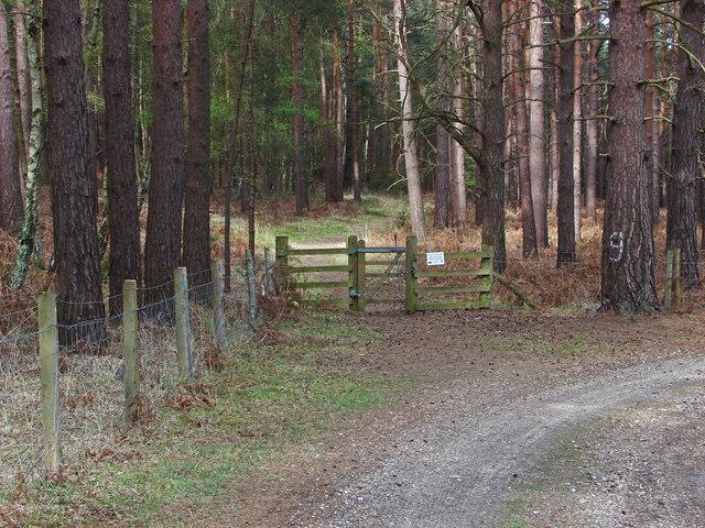 Stock fence, Ash Ranges