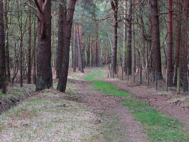 Woodland path, Ash Ranges