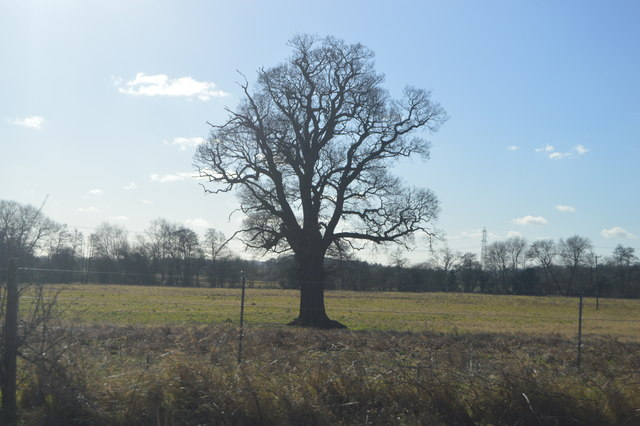 Tree by the Leicester to Birmingham Line