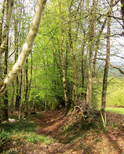 Woodland below Buckland Hill