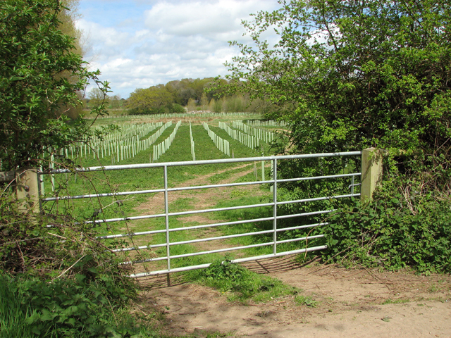 Gate into a new plantation