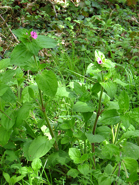 Wild flowers beside the footpath