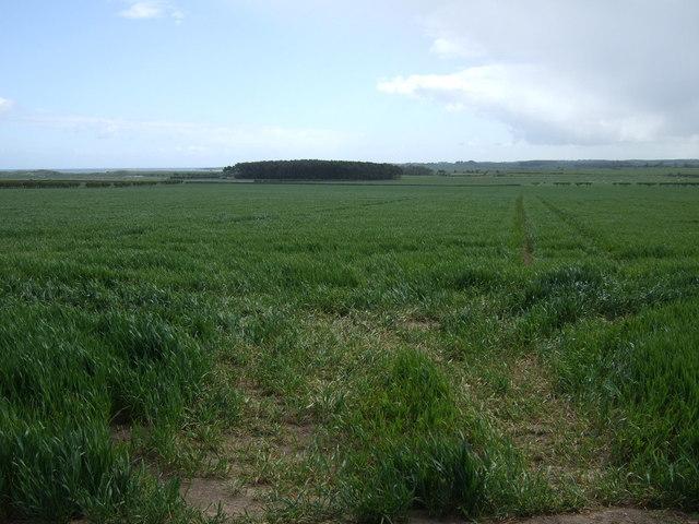 Crop field off the B1340