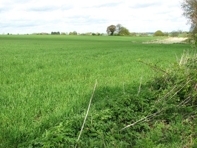 Crop fields near Claxton