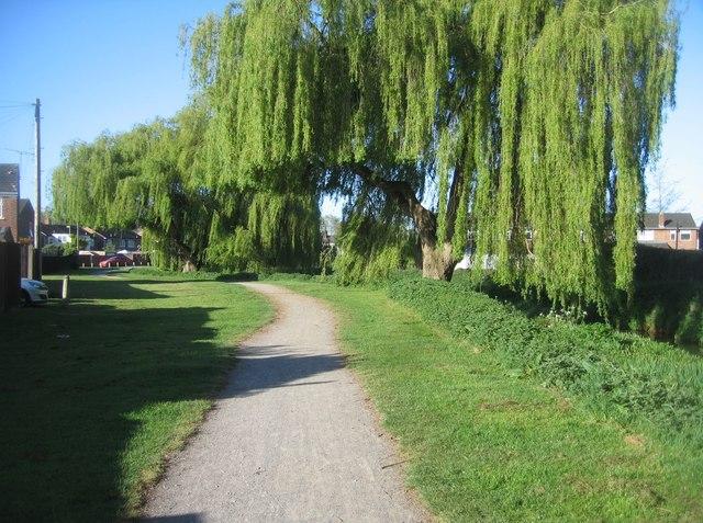 Path along Cove Brook