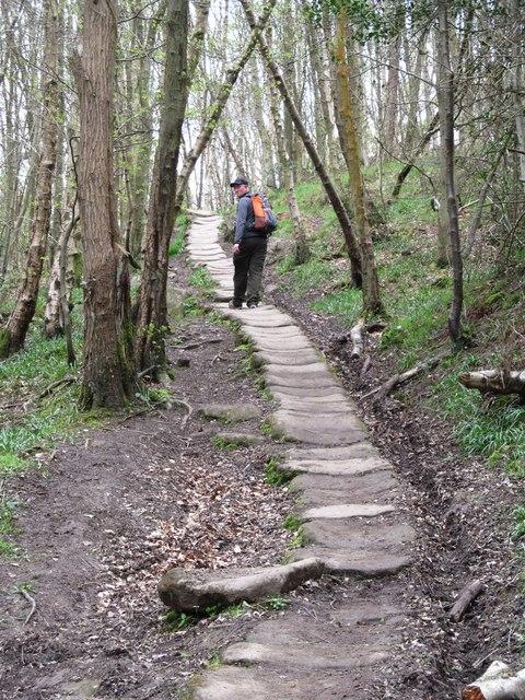 Stone trod in East Arnecliffe Wood