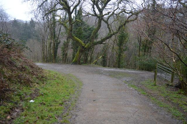 Footpath junction, West Wood