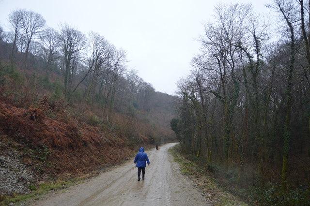 Walking in West Wood