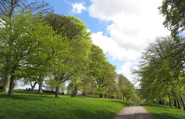 Driveway from Lanhydrock House