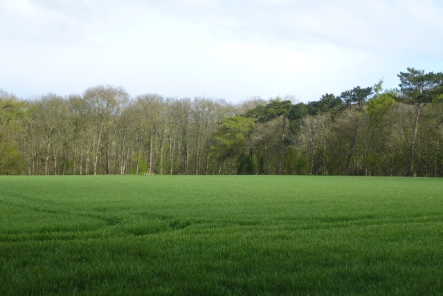 Clearing in Sands Wood
