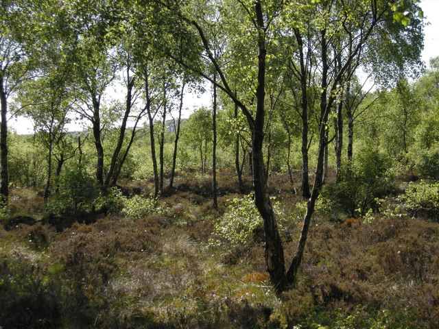 Craigend Wood