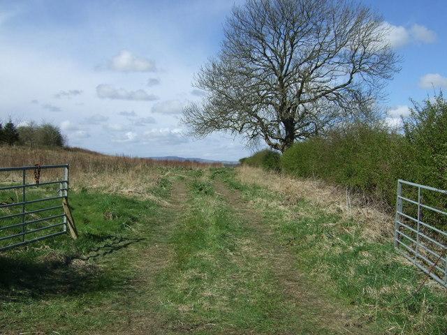 Farm track near Tank Plantation