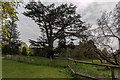 TQ3398 : Cedar of Lebanon, Forty Hall Park, Enfield by Christine Matthews