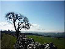 SE0064 : Cracoe Fell from Bank Lane by Carroll Pierce
