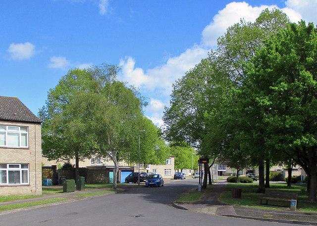 Lichfield Road: spring green