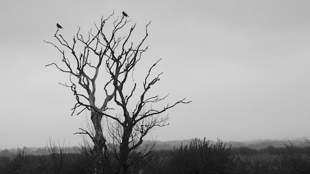 Two Crows on a Dead Tree