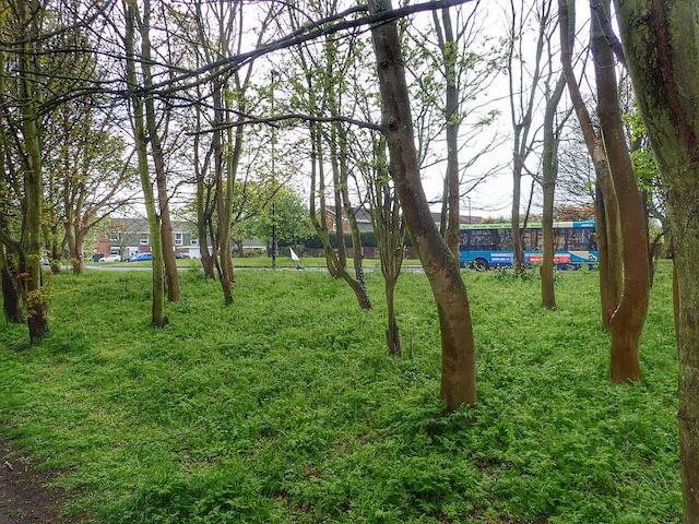 Public Woodland adjacent to the Waggonways