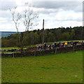 SE2243 : A straggler in the Tour de Yorkshire by Rich Tea