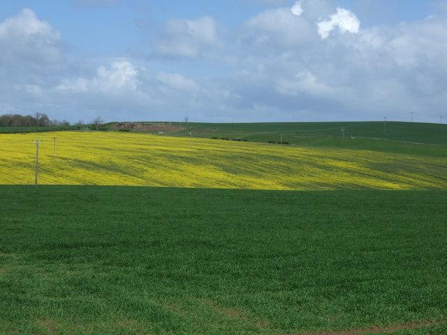 Crop fields near Kentstone