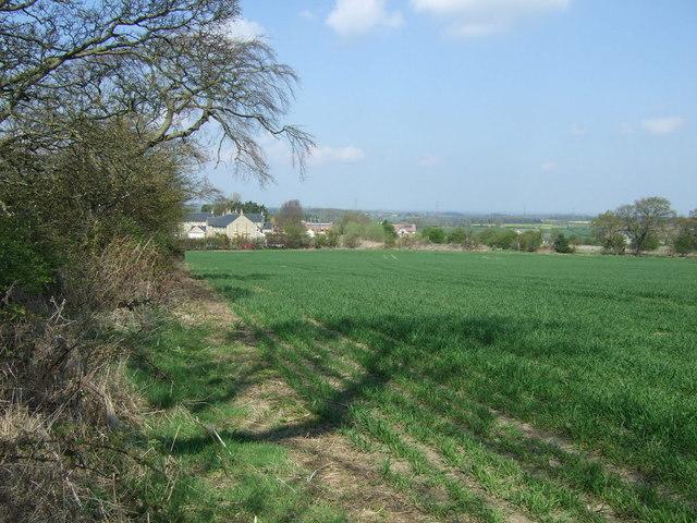 Crop field towards Medburn