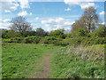 TQ0866 : Scrubland, Desborough Island by Alan Hunt