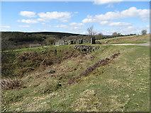 SE6091 : Roadside drain by Pauline E