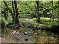 SK1452 : Dove in Dovedale by Derek Harper