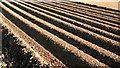 SU7047 : Furrows in a potato field by Hugh Chevallier
