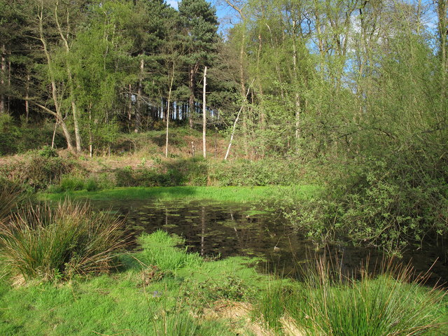 Pond in Sizewell Belts Nature Reserve