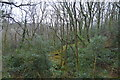 SX5160 : Darklake Wood by N Chadwick