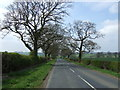 NZ0979 : Tree lined road towards Middleton Bank Top by JThomas