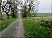SE9048 : Farm  access  road  to  A614 by Martin Dawes