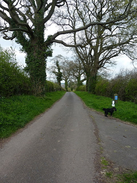 Lane above Astbury Hall