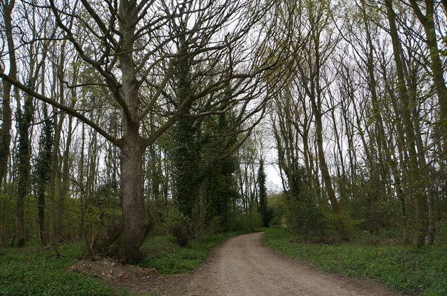 Track through woods, near Fring Wood Farm