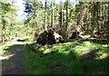 NU0724 : Wind falls in Hepburn Wood by Russel Wills