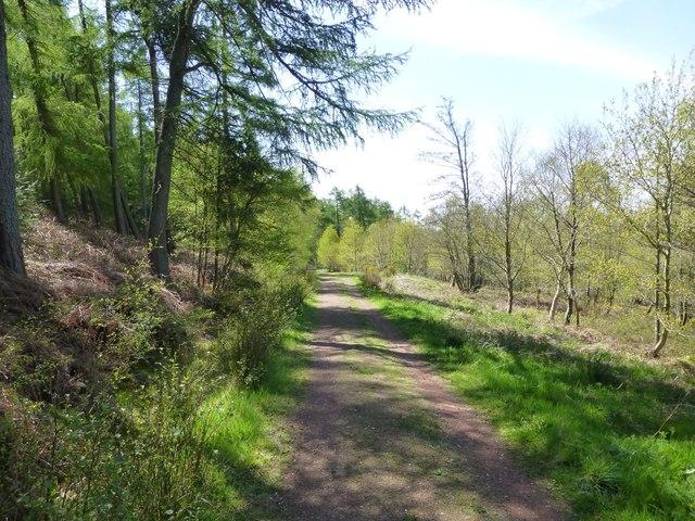 Track in Hepburn Wood