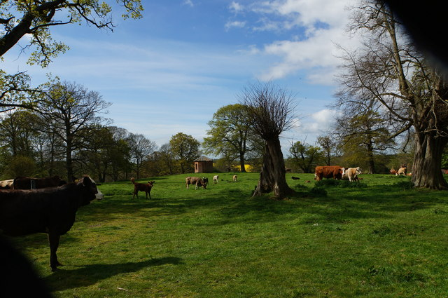 Old  building and cattle, Itteringham