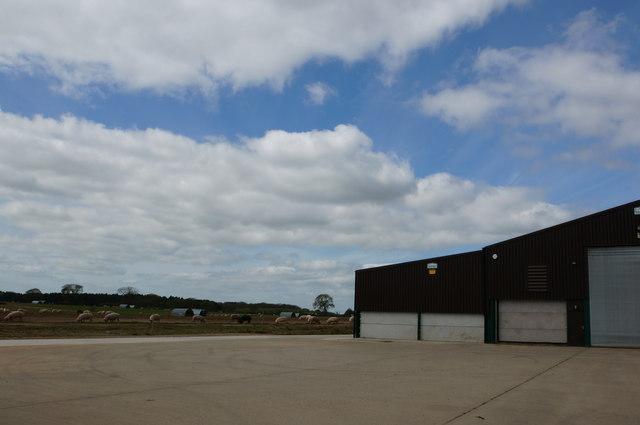 Piggies and farm buildings