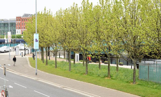 Trees, Queen's Quay, Belfast (May 2015)