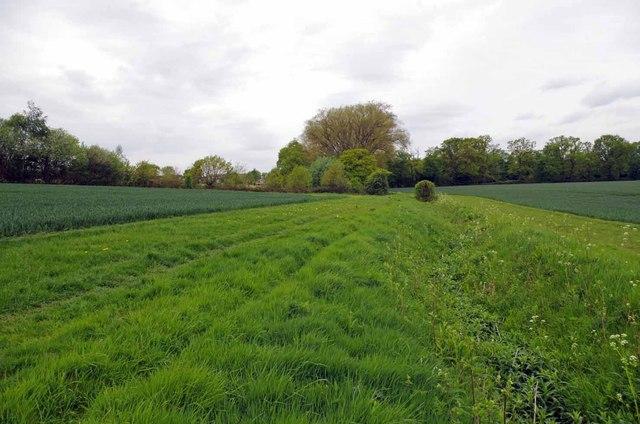 Footpath & Field Drain Near Wyatt's Green by Glyn Baker