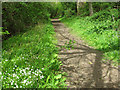 TG2404 : Footpath to Arminghall Wood by Evelyn Simak