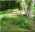 TG2404 : Bluebells in Arminghall Wood by Evelyn Simak