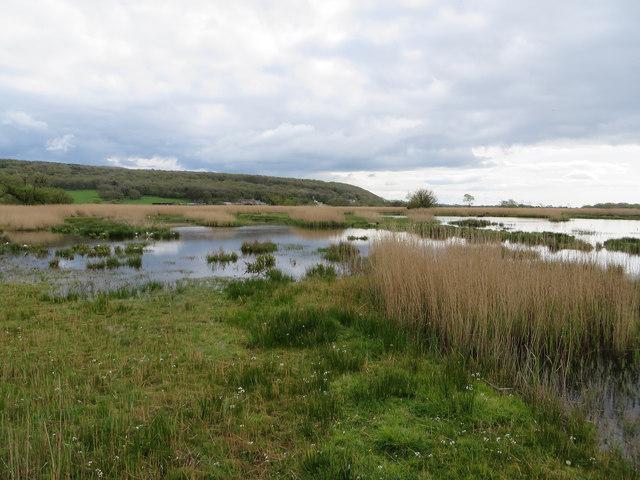 Wetland view to Grisedale Wood
