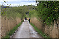 SD4875 : Causeway through the reedbed by Pauline E