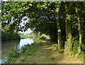 SP3882 : Tree lined towpath of the Oxford Canal by Mat Fascione
