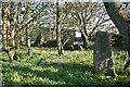 NK0457 : Netherton of Logie Recumbent Stone Circle (2) by Anne Burgess
