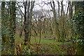 SX5158 : Woodford Wood by N Chadwick
